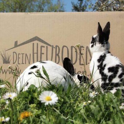 Frisches Heu für Kaninchen